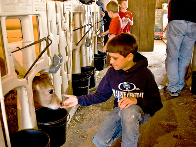 boy petting baby calf