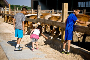kids petting cattle