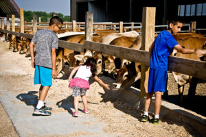kids meeting cows
