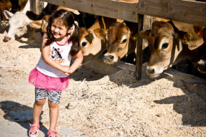 girl and steers