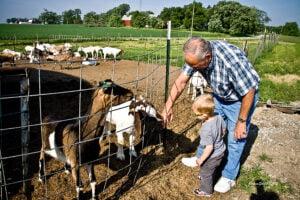 meeting goats