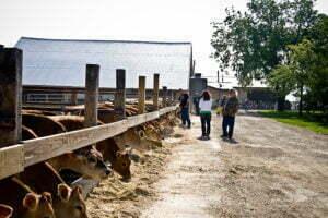 tour group on the farm