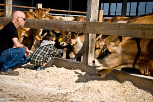 boy and steers