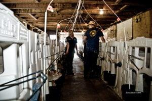 tour group viewing calves