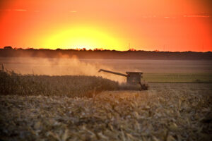 sunset over fields with tractor harvesting corn